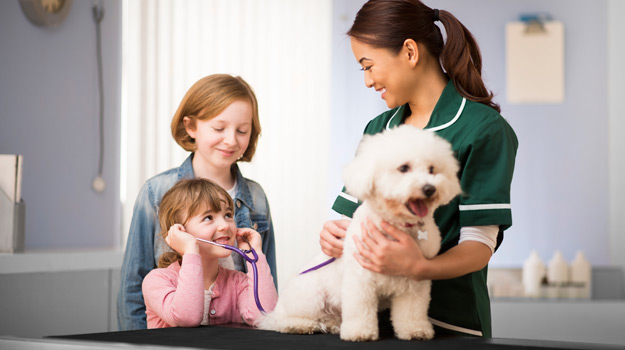 Finding The Veterinary Nurse Job That S Right For You