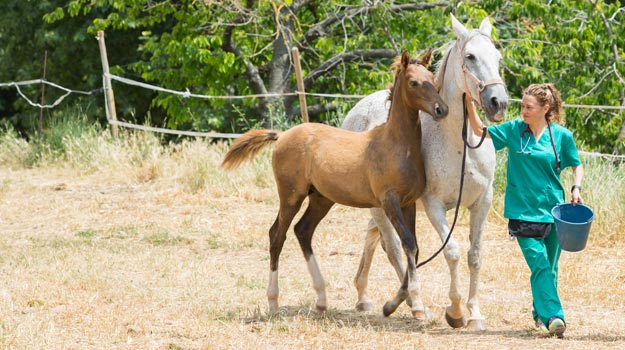 the truth about becoming an equine vet