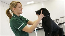 Becoming a vet nurse – training and skills