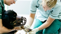 What soft skills do employers look for in a veterinary nurse?