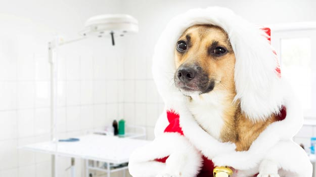 Managing your Christmas workload as a trainee vet or SVN